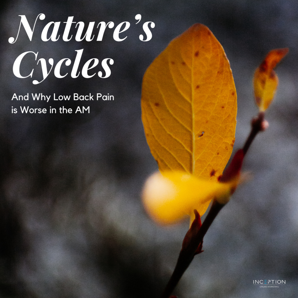 Nature's Cycles - Newsletter